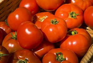 Photo of farm fresh tomatoes